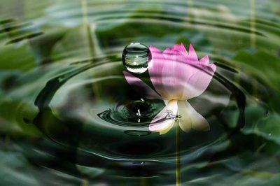 Fiore di loto e acqua