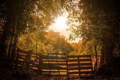 Sole alberi Mantra